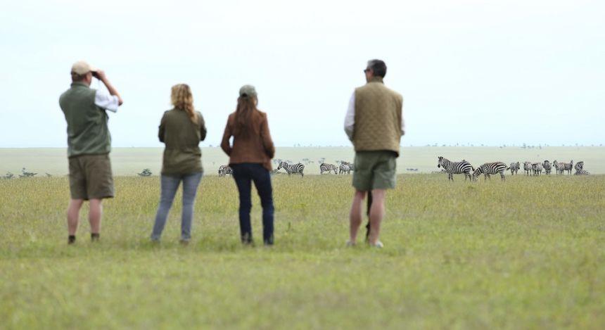 Zebras beobachten in Laikipia - Commmunity Reserves, Kenia