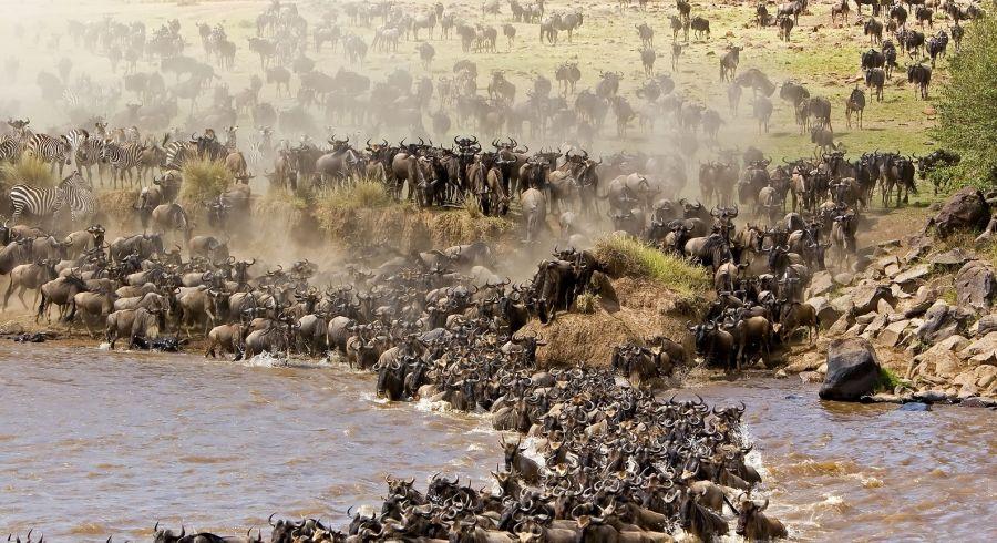 Safarireisen zur Great Migration