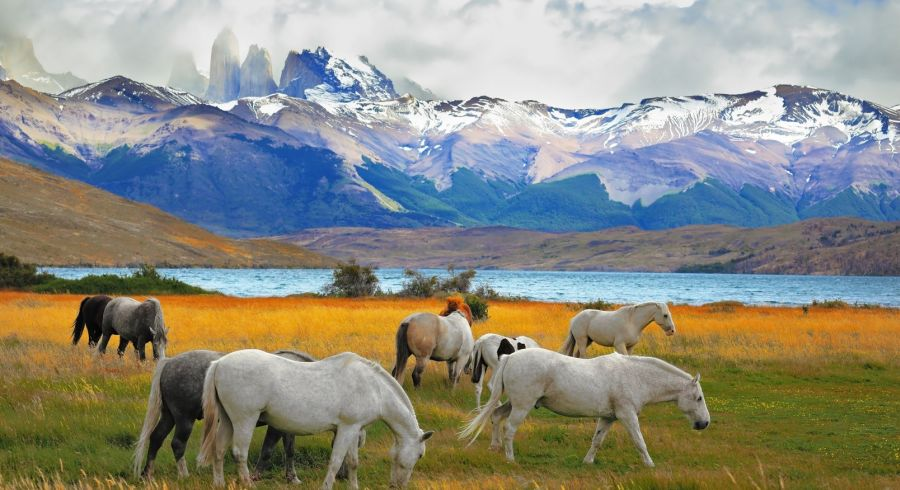 horses-grazing-torres-del-paine-chile-highlights of chile
