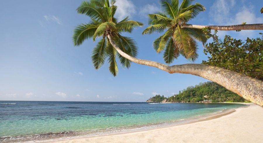 Beste Reisezeit Seychellen - tropisches Wetter, wie hier an einem Sandstrand mit Palmen