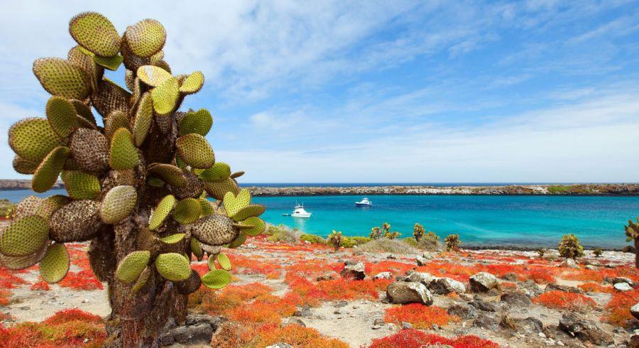 South Plaza Island, Teil des Galapagos Archipels
