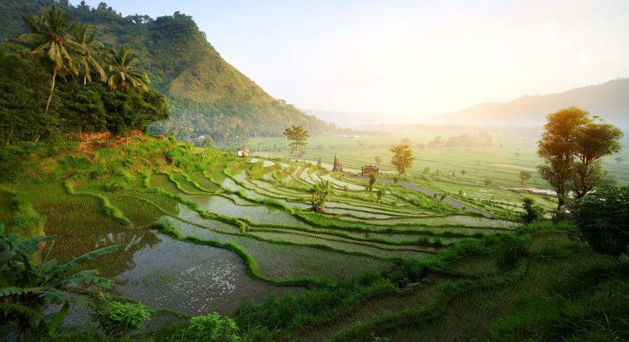 Reisterassen in Indonesien