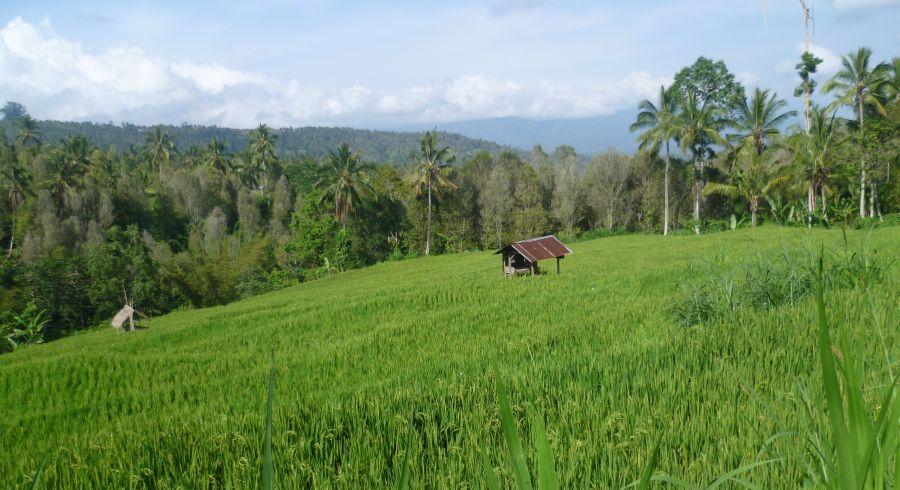 Plantagen in Munduk, Indonesien