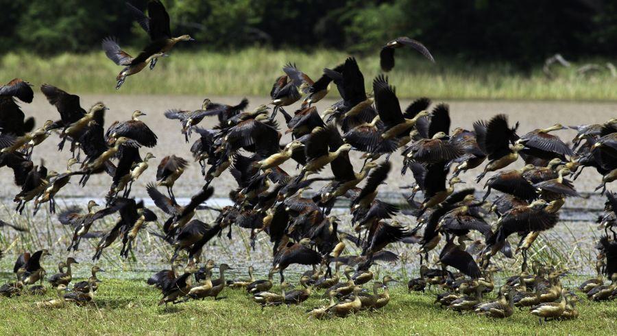 The Best Wildlife Experiences on your Sri Lanka Tour