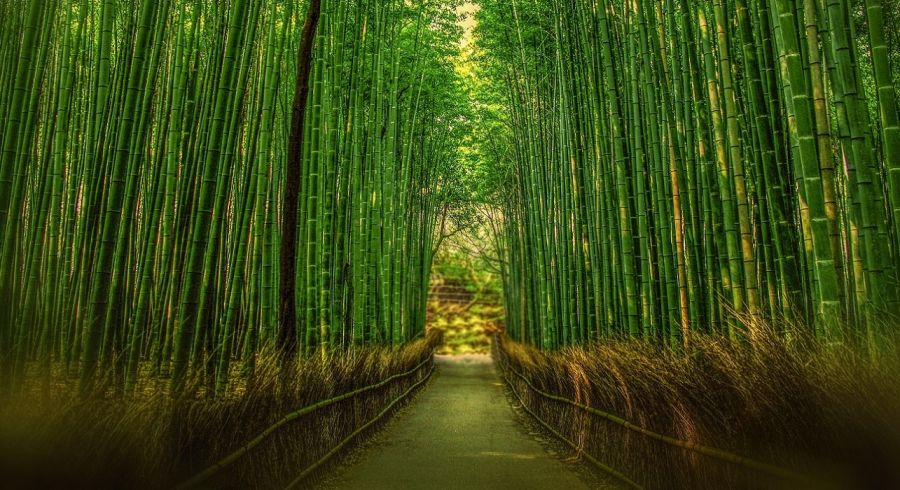 Enchanting Travels Japan Tours Kyoto sights Bamboo forest