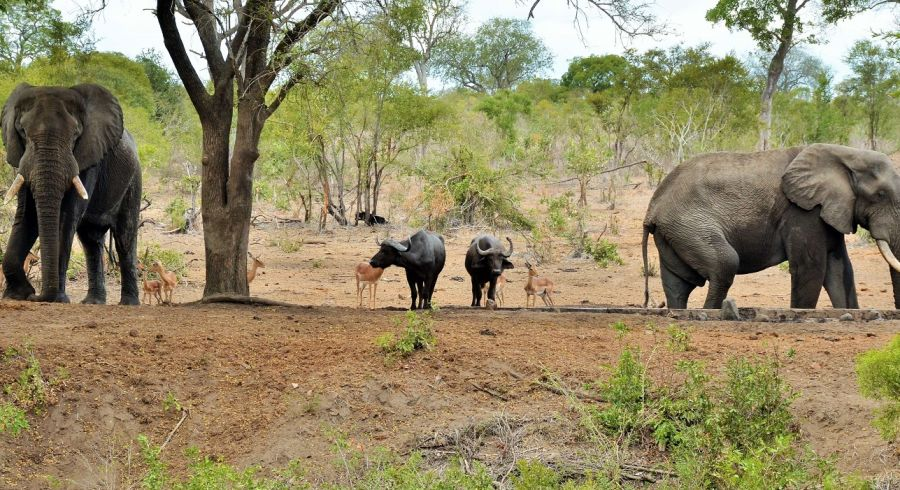 Elefanten im Krüher Nationalpark