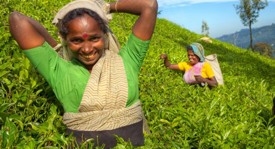 Group of Happy Tea Pickers in Hills of Sri Lanka - Best time to travel to Sri Lanka