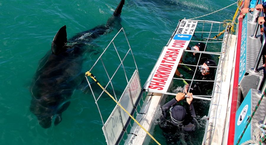 Enchanting Travels - South Afria Tours - Overberg - Birkenhead House - Shark diving 2