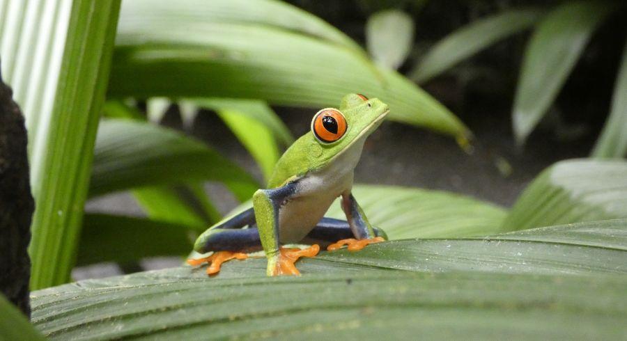 Zu Ihrer Sicherheit in Costa Rica: Vorsicht vor giftigen Tieren