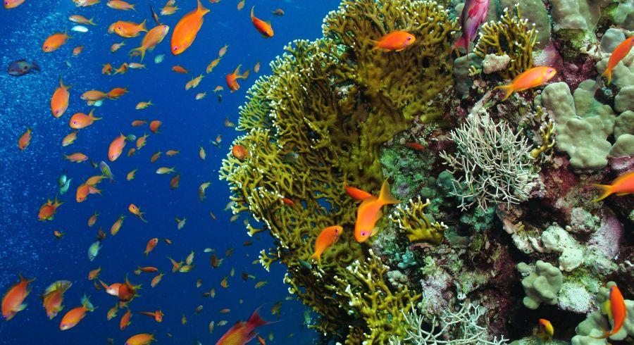 Unterwasserbewohnern von Mauritius