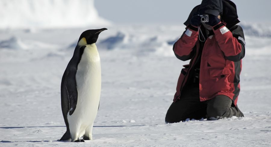 Enchanting Travels Penguin photos