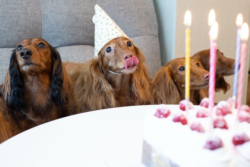 Celebrating World Animal Day