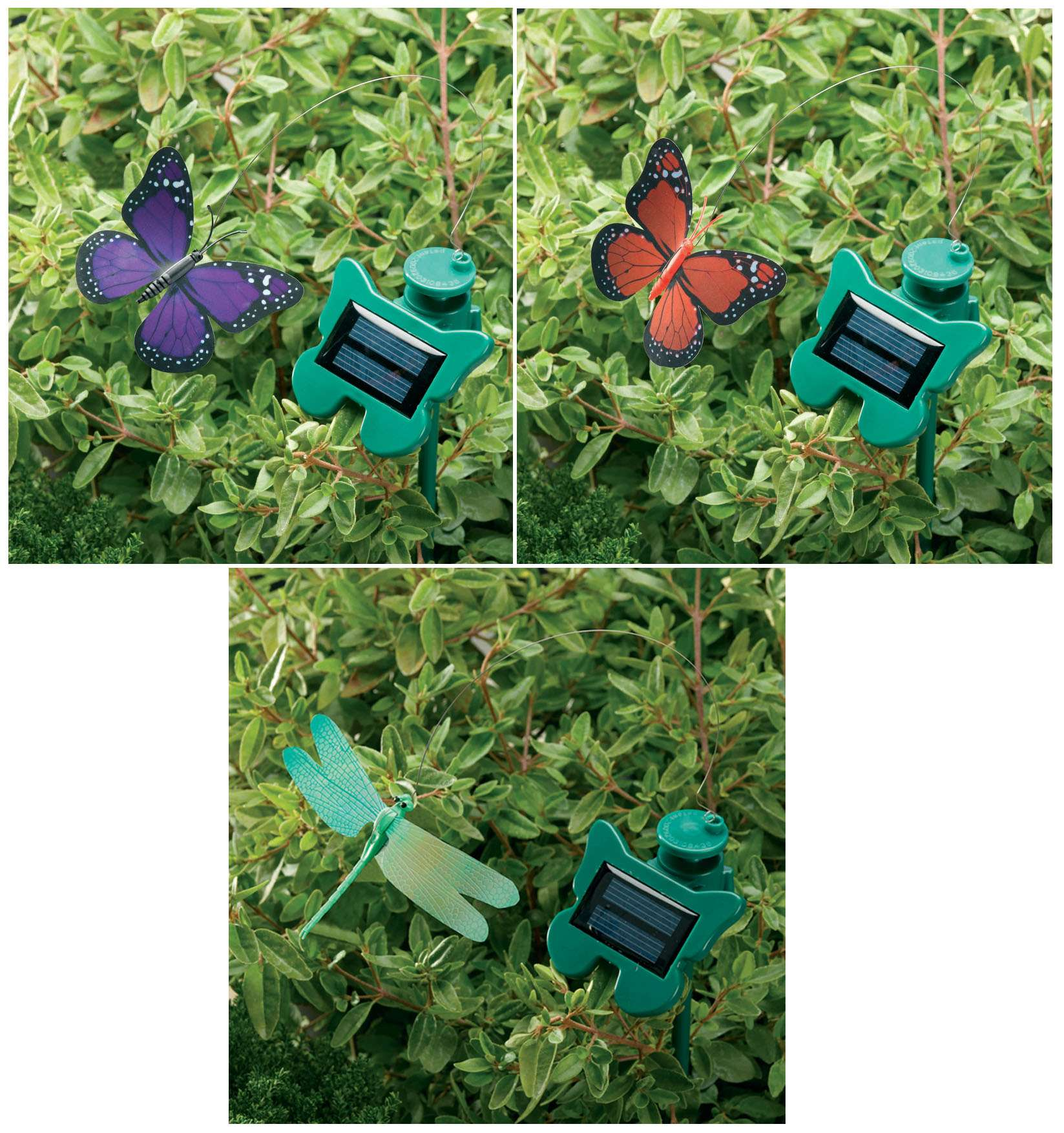 Flutterby Set of 3 (2 Butterflies, 1 Dragonfly)