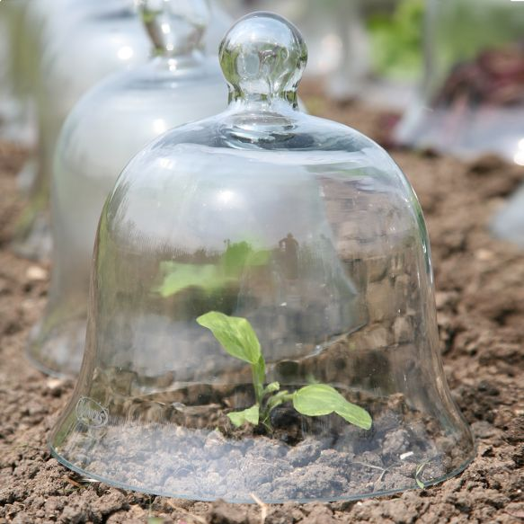 Small Victorian Glass Bell Jar from Haxnicks