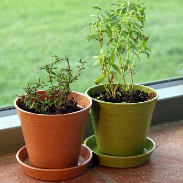"""3"""" Bamboo Saucer - Sage Green"""