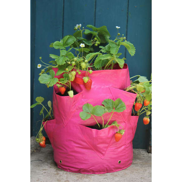 Strawberry and Herb Patio Planter from Haxnicks