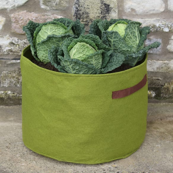 Haxnicks Vigoroot Vegetable Planter