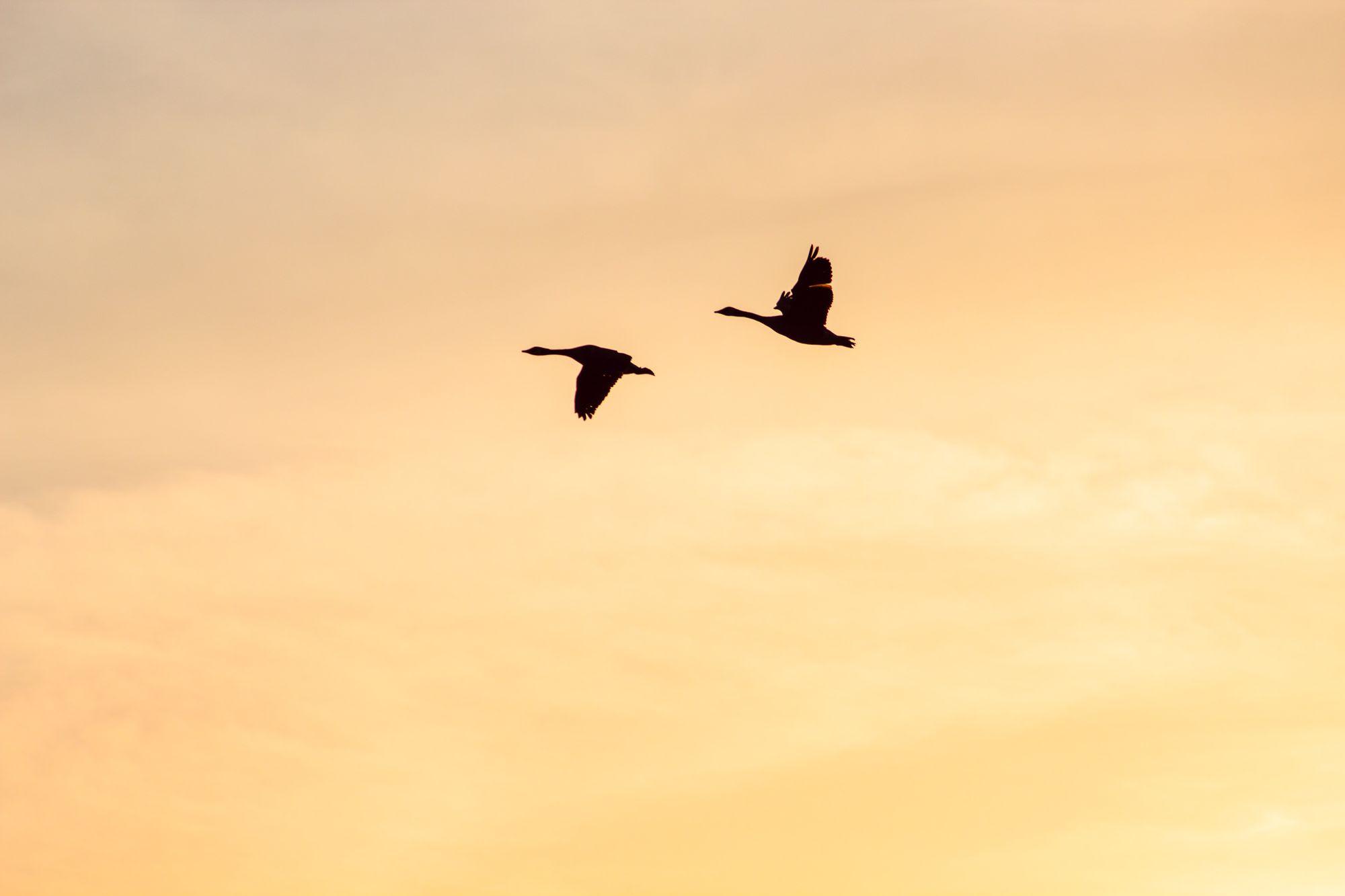How to migrate from Heroku Scheduler