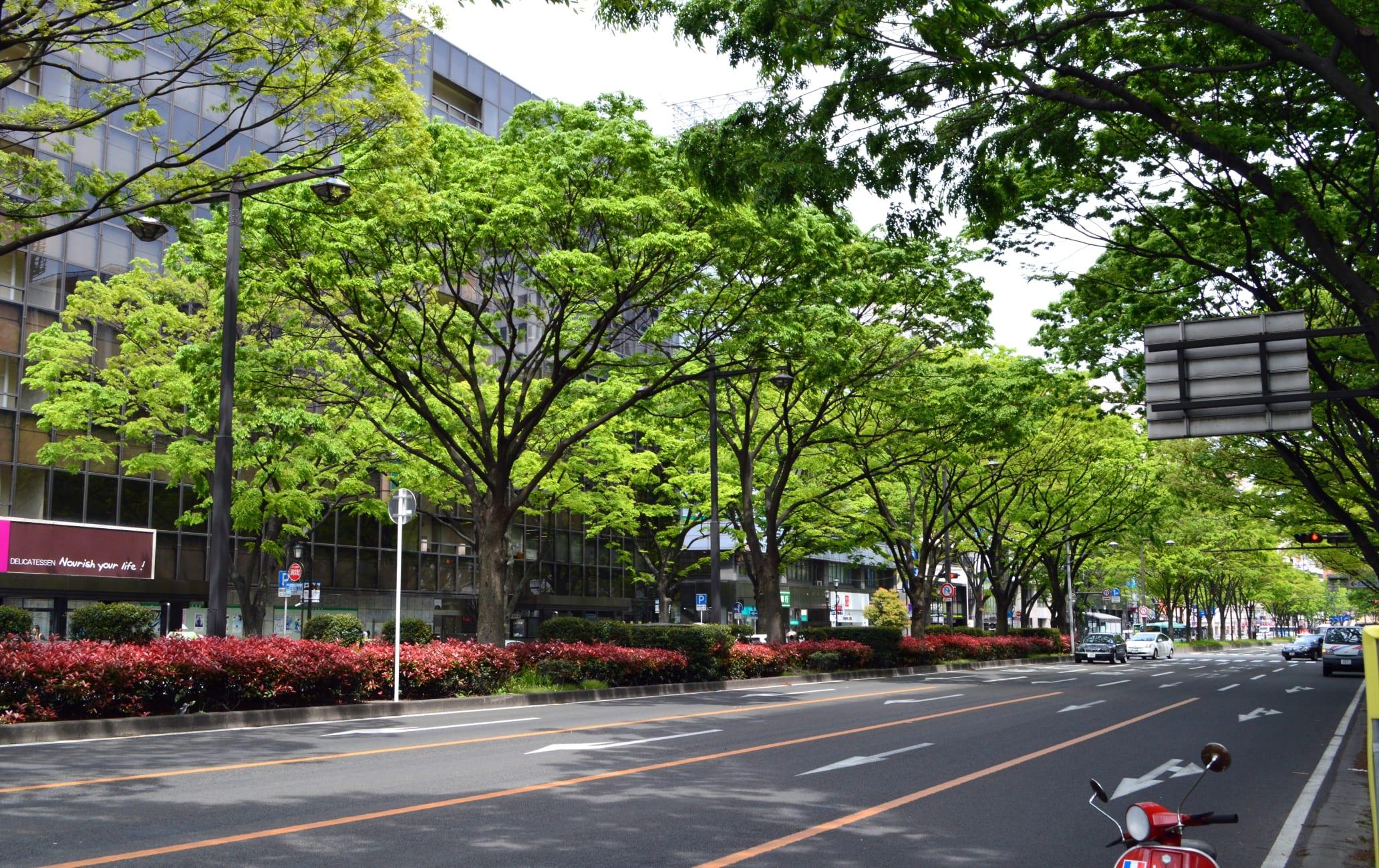 Aoba-dori Street
