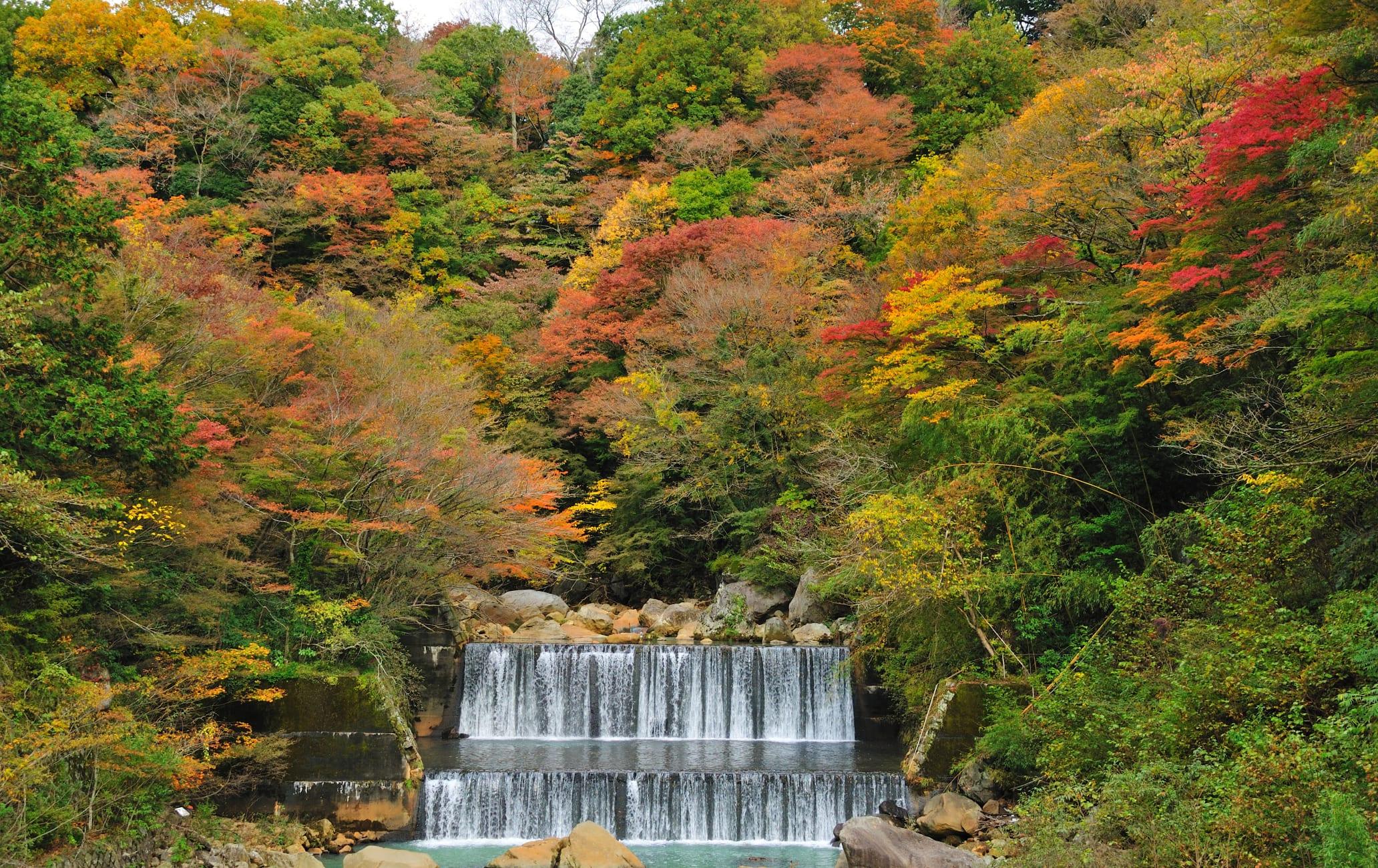 Hakone Autumn leaf-AUT