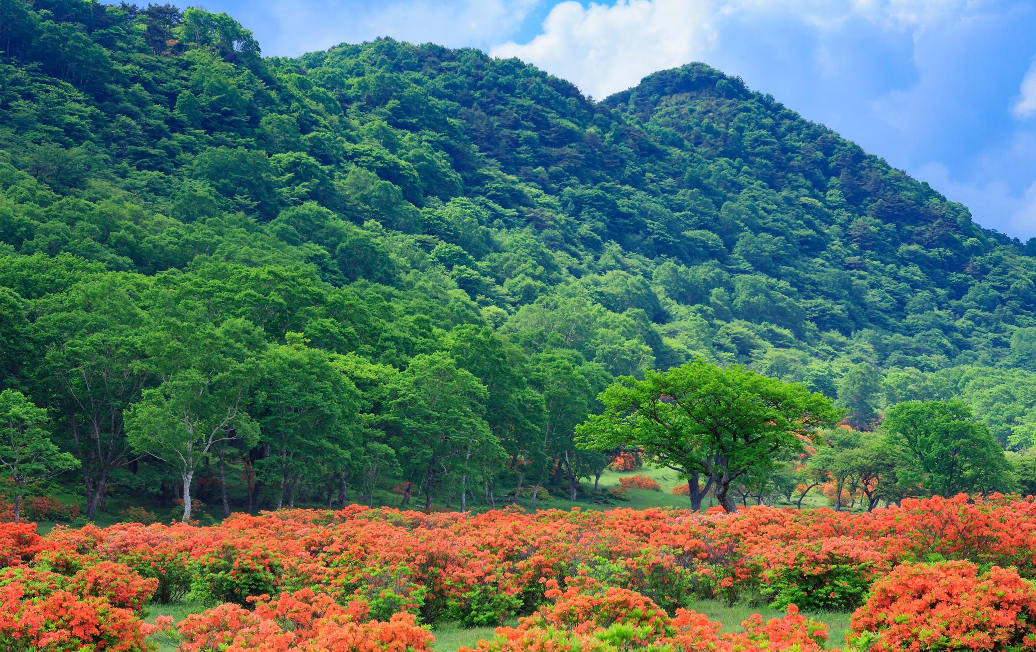 Mt. Akagi-yama Area