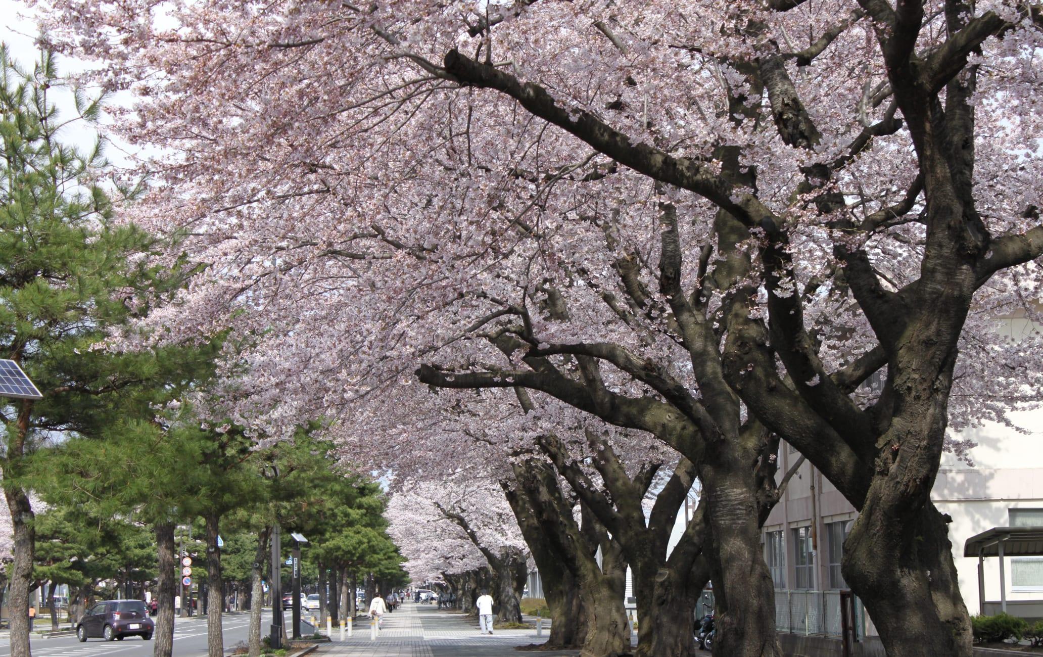 Nikko Kaido Sakura Route