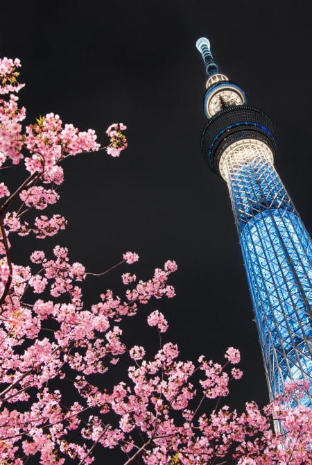 Seasonal Highlights tokyo sky tree