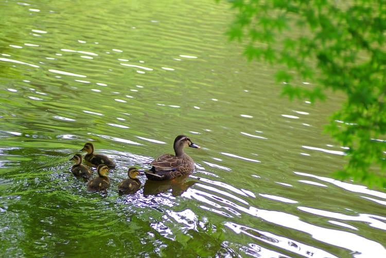 Izumi Nature Park