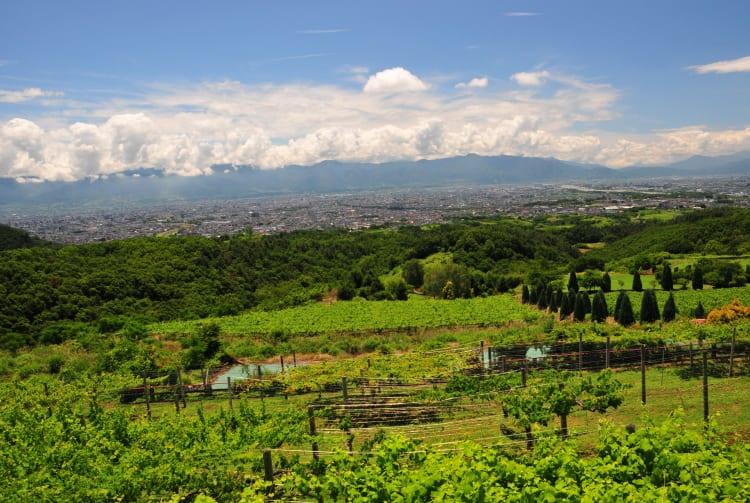 Suntory Tominooka Winery