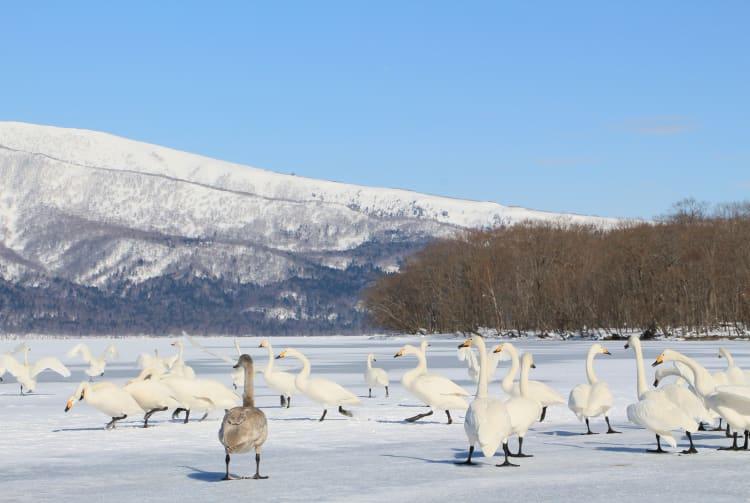 Lake Tofutsu