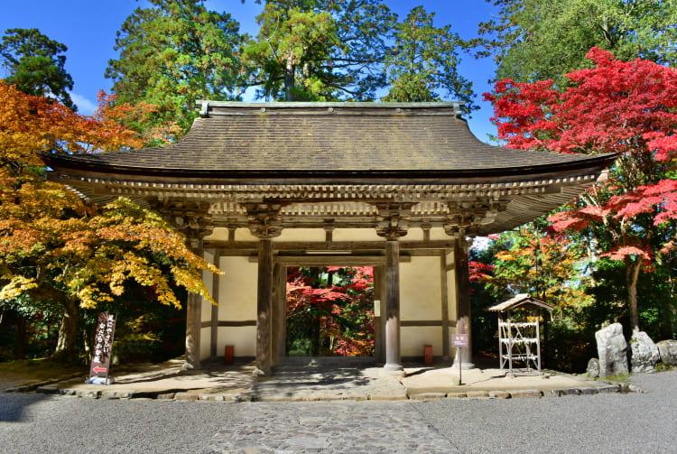 Fall Foliage of Saimyoji