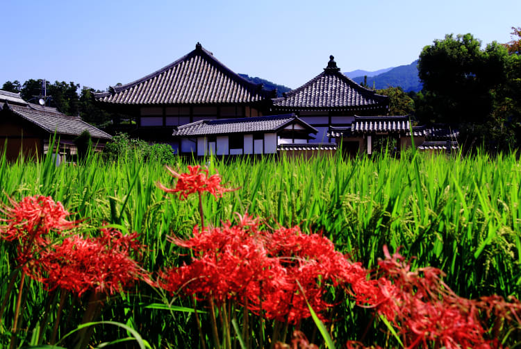 Asuka-dera Temple
