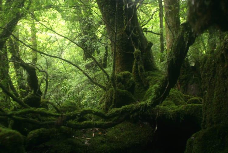Jomonsugi