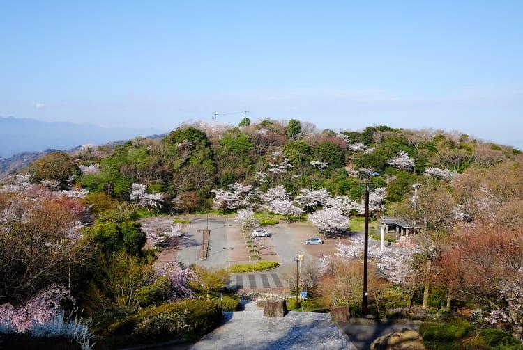 Bizan Park-cherry blossom