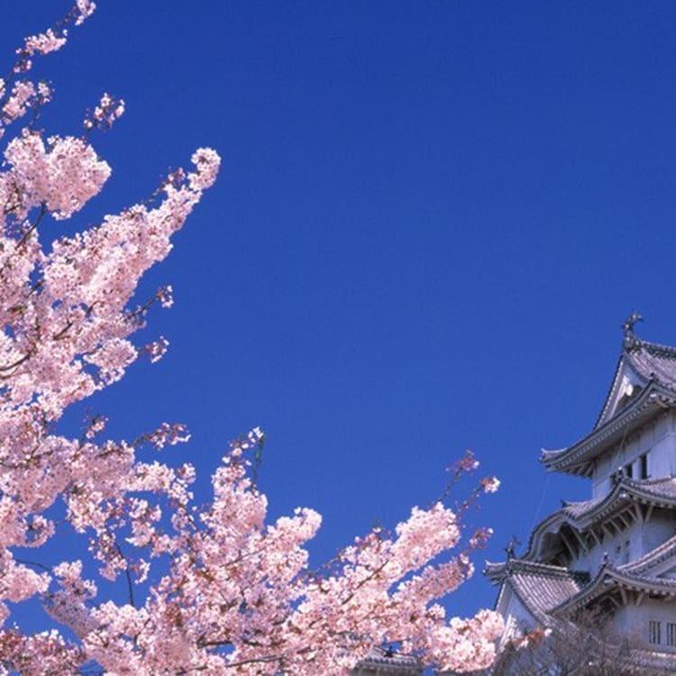 Sakura History Japan National Tourism Organization
