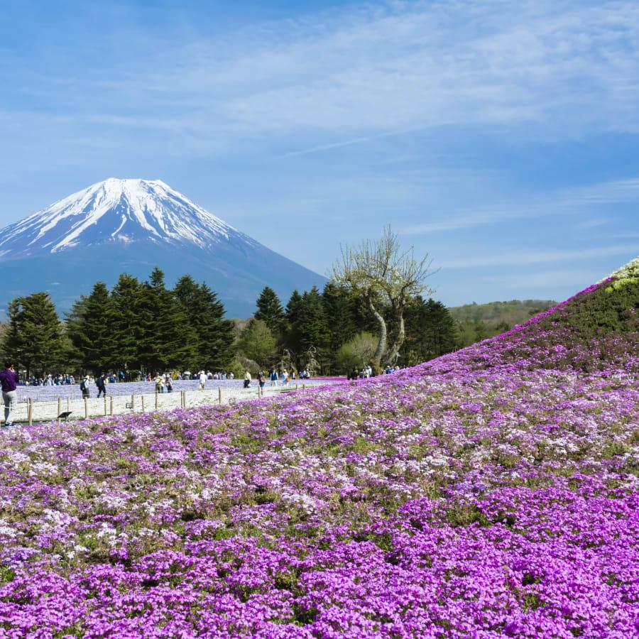 Explore the Fuji Five Lakes