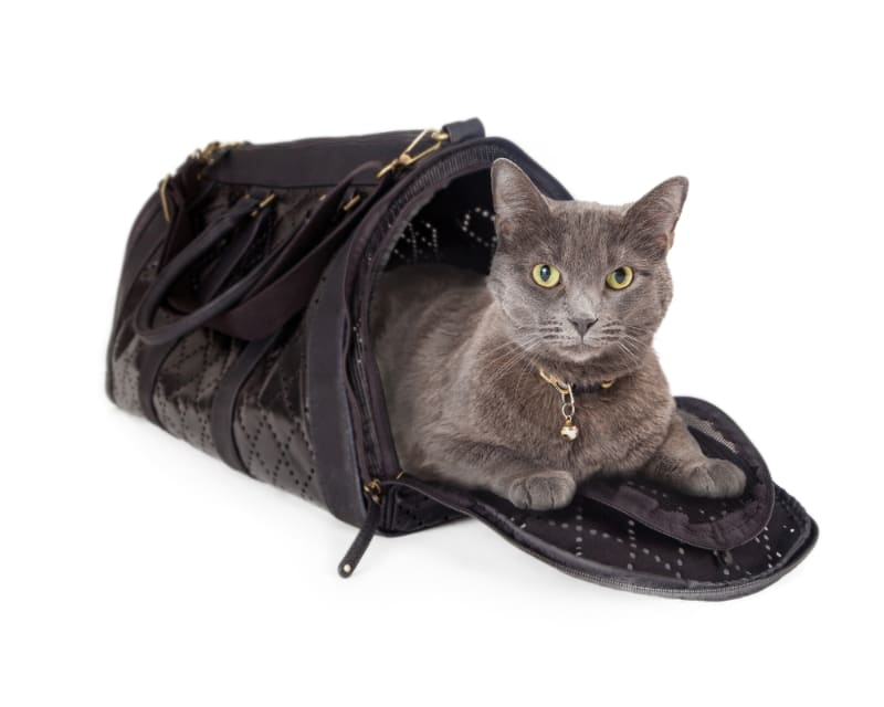 What Size Carrier for a Cat Do I Need?
