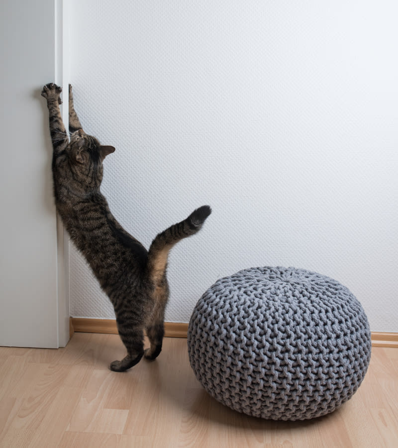 How To Stop A Cat From Scratching Walls: Simple Tips