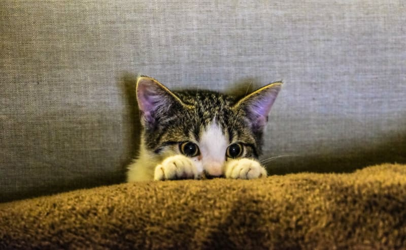 Important Facts That You Should Know About Scratching Posts