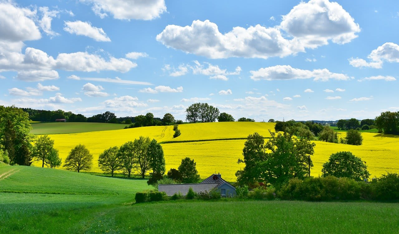 bright sunny day with clouds in the sky and green pasture of trees