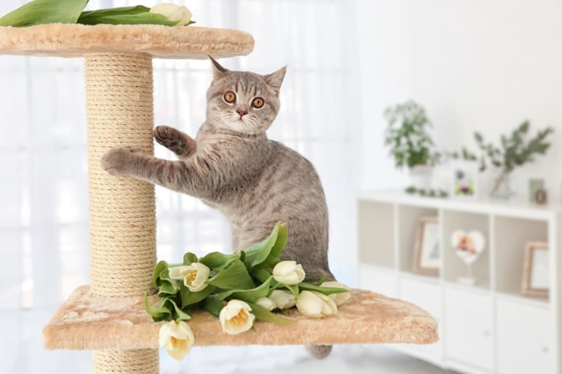 gray cat on scratching post with white flowers