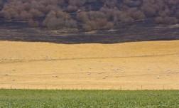 Black Saturday bushfires, 2009. Joseph FEIL, born 1972.