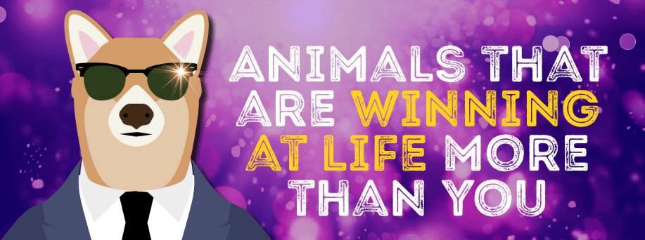 Animals that are winning at life