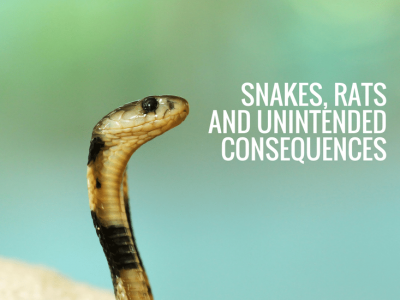 Snakes, Rats and Unintended Consequences