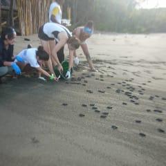 Carate Beach - Costa Rica sea turtles