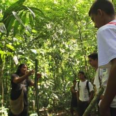 rainforest flora and fauna in Costa Rica
