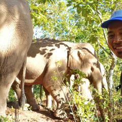 Chiang Mai elephant trek