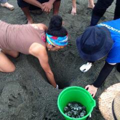 Costa Rica turtle tours