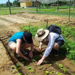 organic vegetable gardening basics