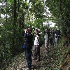 birding in Mexico